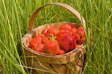 Free Basket Of The Strawberries Stock Photography - 10158582