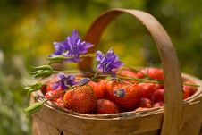 Free Basket Of The Strawberries Stock Photos - 10158683