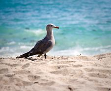 Free Seagull On The Beach Stock Image - 10158701