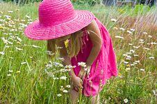 Free Wild Daisies Stock Image - 10159081