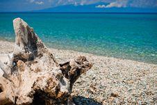 Free Stump On Beach Royalty Free Stock Photography - 10159657