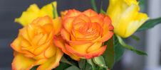 Free Flower, Rose, Yellow, Rose Family Stock Images - 101538624