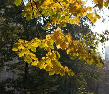 Free Yellow And Green Autumn Leaves 3 Stock Photos - 101539383