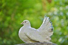 Free Bird, Beak, Fauna, Grass Stock Images - 101539654