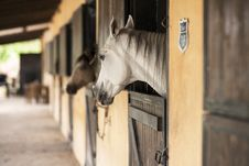 Free Horse, Stable, Horse Like Mammal, Horse Supplies Royalty Free Stock Images - 101551359