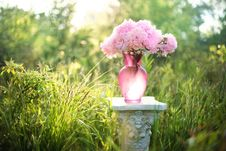 Free Pink, Flower, Plant, Spring Royalty Free Stock Photos - 101560718