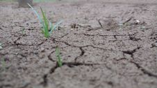 Free Soil, Drought, Grass, Plant Stock Photography - 101561842