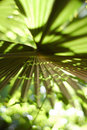 Free Palm Frond Stock Images - 10161384