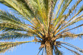 Free Palm Tree Stock Photography - 10162802
