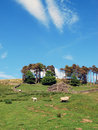 Free Yorkshire Dales Postcard View Royalty Free Stock Photo - 10166425