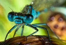 Dragonfly Portrait Stock Photo