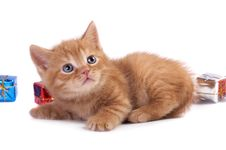 Free The Kitten Royalty Free Stock Photo - 10161005