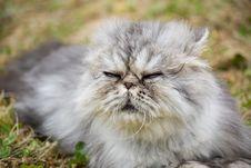 Free Garfield Cat Stock Photography - 10161012