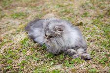 Free Garfield Cat Stock Photo - 10161020