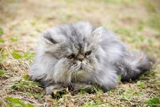 Free Garfield Cat Stock Photography - 10161032