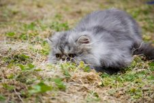 Free Garfield Cat Stock Photos - 10161053