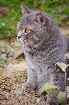 Free Cat Stock Image - 10161151