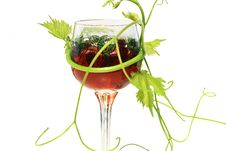 Wine In The Glass And Vine Royalty Free Stock Photo