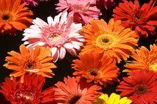 Free Flowers Stock Image - 10164921