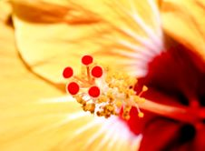 Free A Flower Displayed In A Botanical Garden Royalty Free Stock Image - 10165486