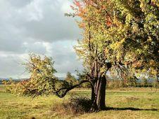 Autumn Landscape With Idyllic Tree At Sunrise Stock Photos