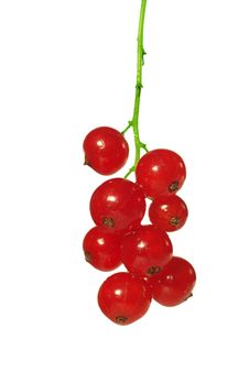 Free Red Currants Stock Images - 10167524