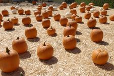 Free Pumpkin Patch Royalty Free Stock Photos - 10168178