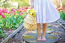 Free Yellow, Pink, Flower, Spring Royalty Free Stock Image - 101607516