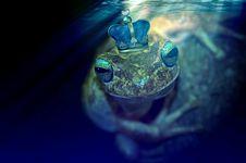 Free Water, Amphibian, Frog, Marine Biology Stock Photo - 101608830
