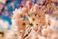 Free Blossom, Flower, Pink, Spring Stock Images - 101627504
