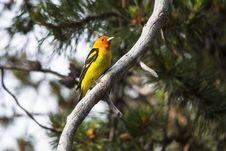 Free Bird, Fauna, Beak, Tree Stock Image - 101628031