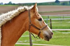 Free Horse, Halter, Bridle, Horse Tack Stock Photography - 101630372