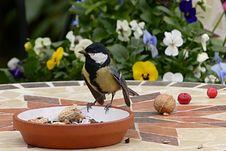Free Bird, Fauna, Beak, Bird Food Royalty Free Stock Photography - 101631047