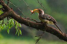 Free Bird, Beak, Ecosystem, Hornbill Stock Photo - 101631720