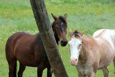 Free Horses Stock Photos - 101663063