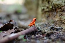 Free Bird, Organism, Beak, Old World Flycatcher Royalty Free Stock Photography - 101689827