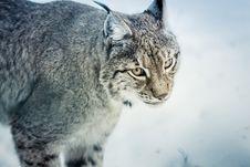 Free Animal, Animal, Photography, Big Royalty Free Stock Images - 101699549