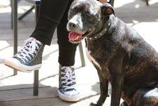 Free Nice Dog Stock Photography - 101699592