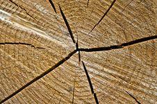 Free Tree Stock Image - 10170951