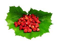 Free Wild Strawberry Royalty Free Stock Photos - 10171558