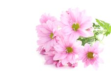Free Flowers Royalty Free Stock Image - 10173886