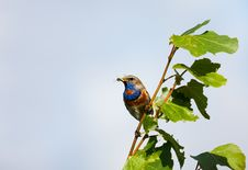 Free Bird With Prey On A Branch Stock Photos - 10174963