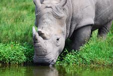Free Rhino Stock Photo - 10177390