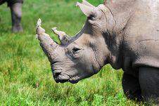 Free Rhino Stock Images - 10177394