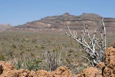 Mojave Desert, California Royalty Free Stock Photos