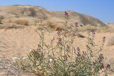 Free Kelso Sand Dunes, Mojave Desert, California Stock Photo - 10177800