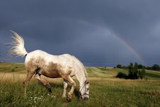 Horse Under A Rainbow Royalty Free Stock Image