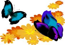 Free Two Butterflies - 2 Stock Photos - 10179093