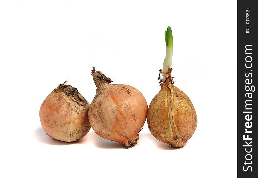 Onion over white