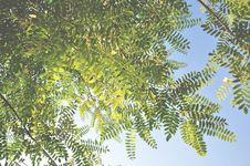 Free Vegetation, Tree, Leaf, Branch Stock Images - 101701134